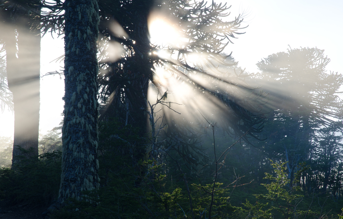 Webinar: Bosques de La Araucanía y su rol frente al cambio climático