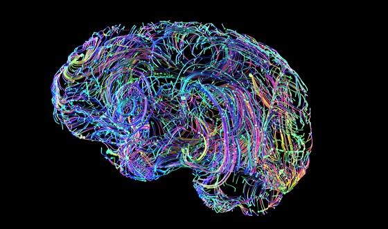 """Seminario """"Cerebro, Emociones y SARS Cov-2 Covid-19"""""""